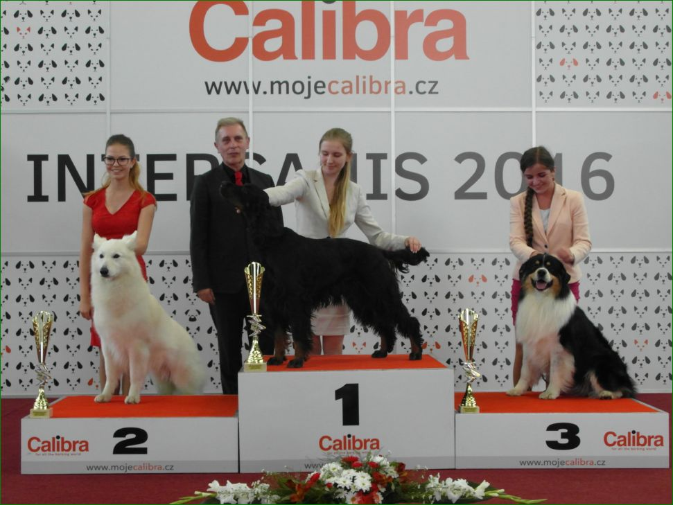 Junior Handler, 14-17 years (Saturday, 18 June 2016) - BIS CACIB Intercanis Brno 2016 (Czech Republic), 18-19 June 2016