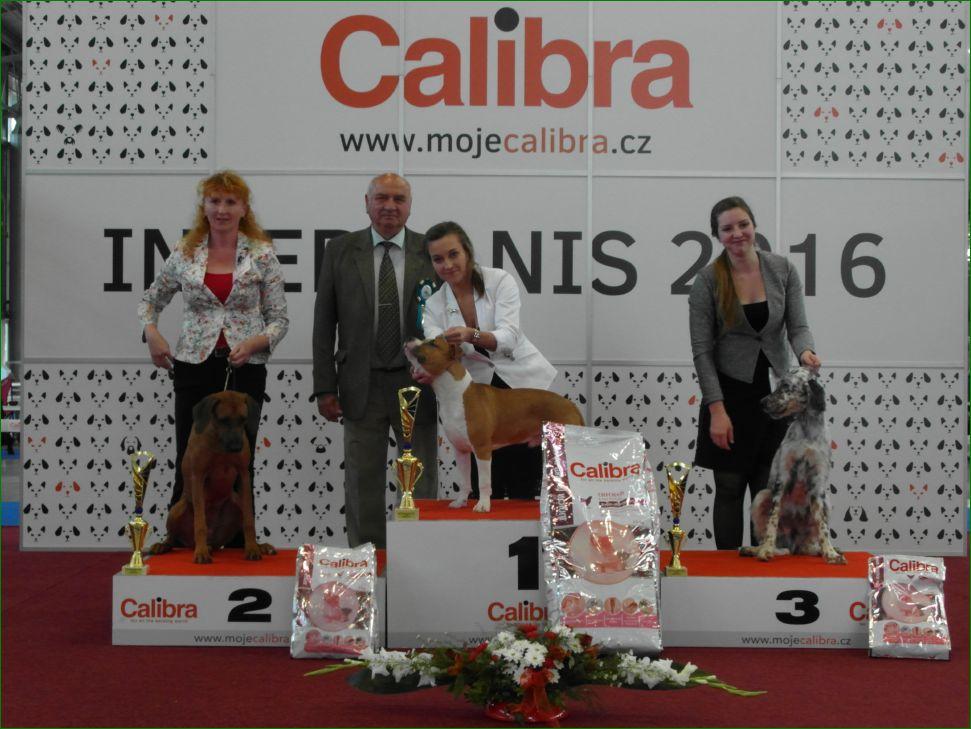 Лучший щенок (суббота, 18 июня 2016) - BIS CACIB «Intercanis» Брно (Чехия), 18-19 июня 2016 года
