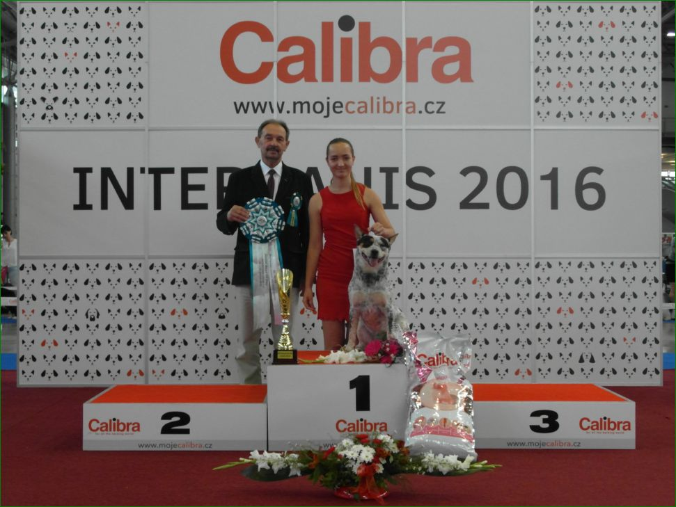 Best Junior of Day (Saturday, 18 June 2016) - BIS CACIB Intercanis Brno 2016 (Czech Republic), 18-19 June 2016