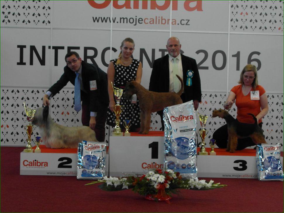 Группа FCI III - BIS CACIB «Intercanis» Брно (Чехия), 18-19 июня 2016 года