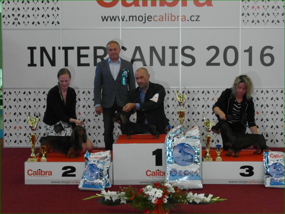 Группа FCI IV - BIS CACIB «Intercanis» Брно (Чехия), 18-19 июня 2016 года