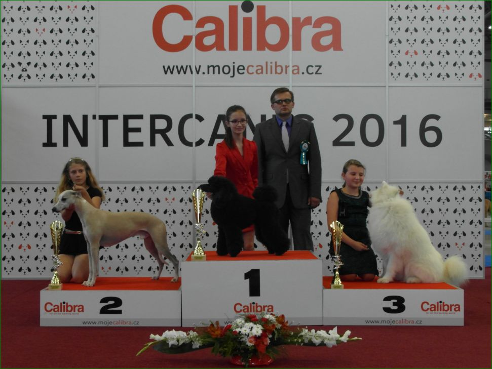 Junior Handler, 9-13 years (Sunday, 19 June 2016) - BIS CACIB Intercanis Brno 2016 (Czech Republic), 18-19 June 2016