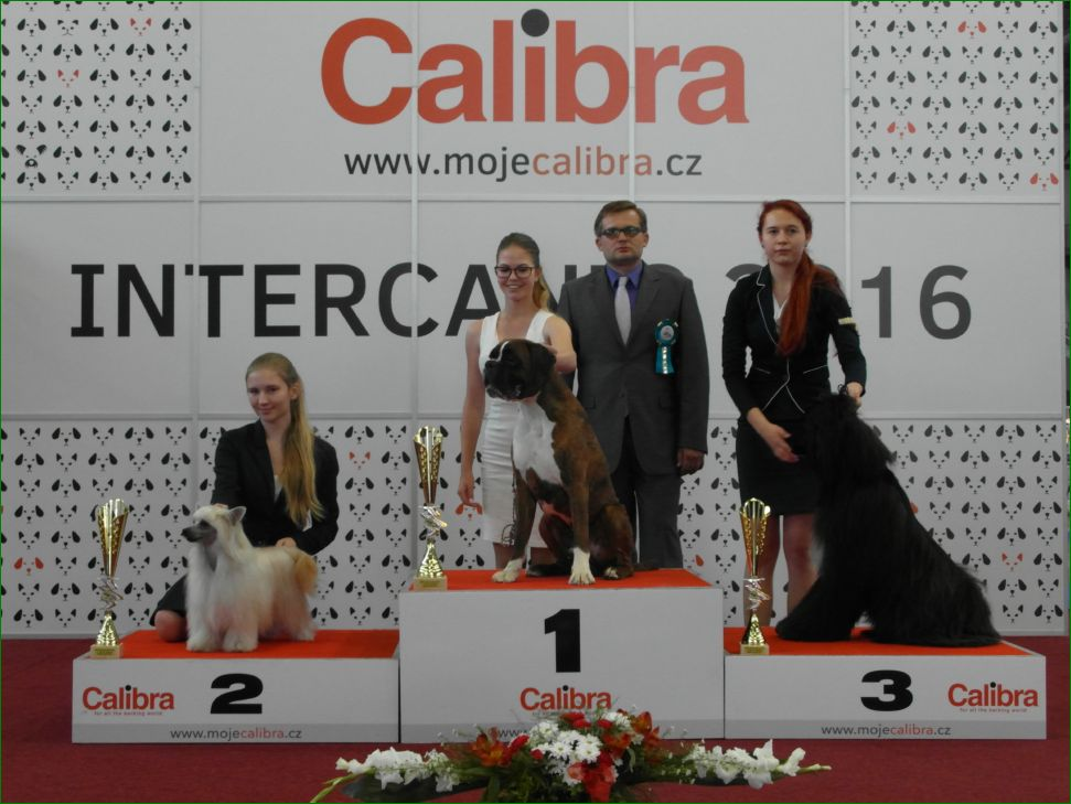 Junior Handler, 14-17 years (Sunday, 19 June 2016) - BIS CACIB Intercanis Brno 2016 (Czech Republic), 18-19 June 2016