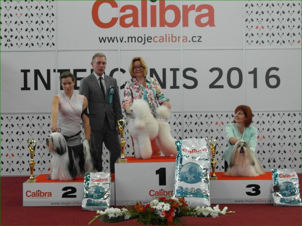 Лучший ветеран (воскресенье, 19 июня 2016) - BIS CACIB «Intercanis» Брно (Чехия), 18-19 июня 2016 года