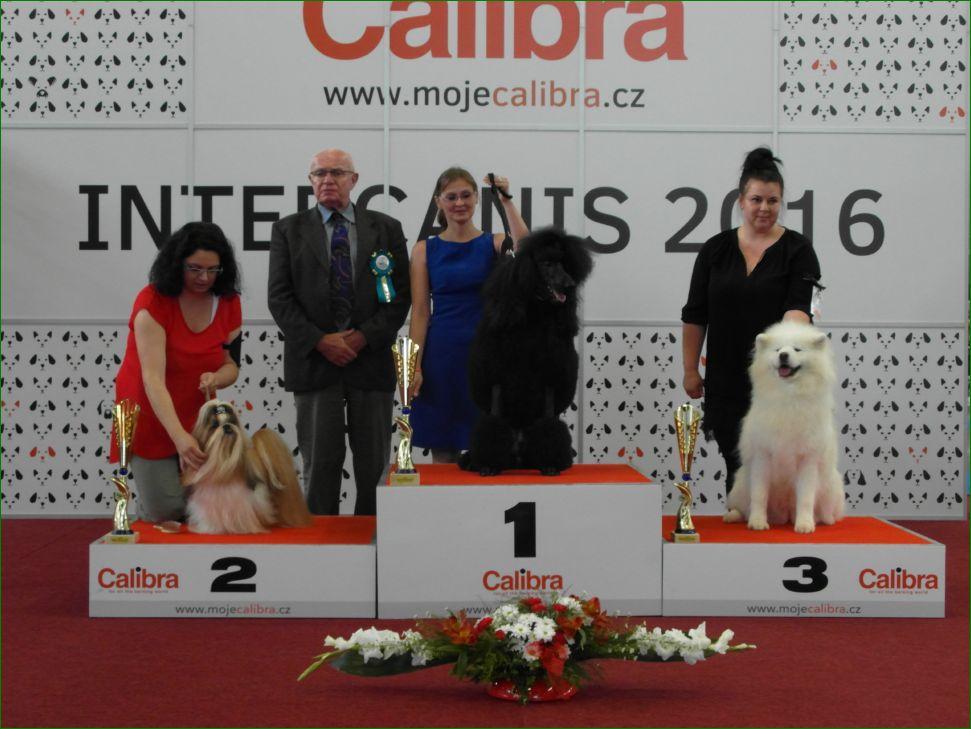 Honours class (воскресенье, 19 июня 2016) - BIS CACIB «Intercanis» Брно (Чехия), 18-19 июня 2016 года