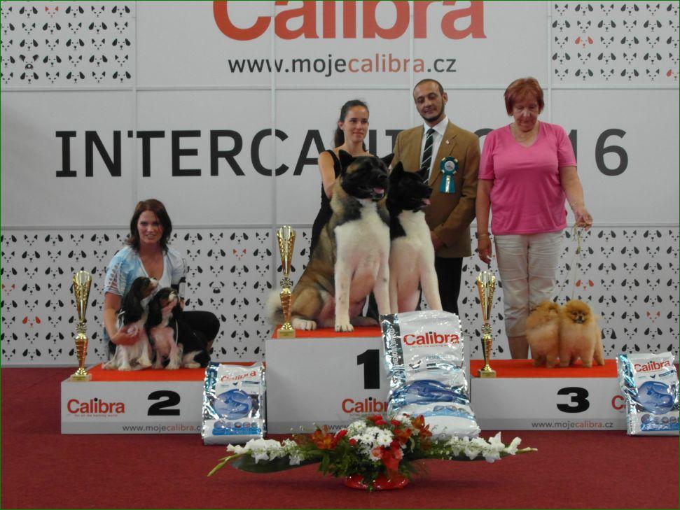 Лучшая пара (воскресенье, 19 июня 2016) - BIS CACIB «Intercanis» Брно (Чехия), 18-19 июня 2016 года