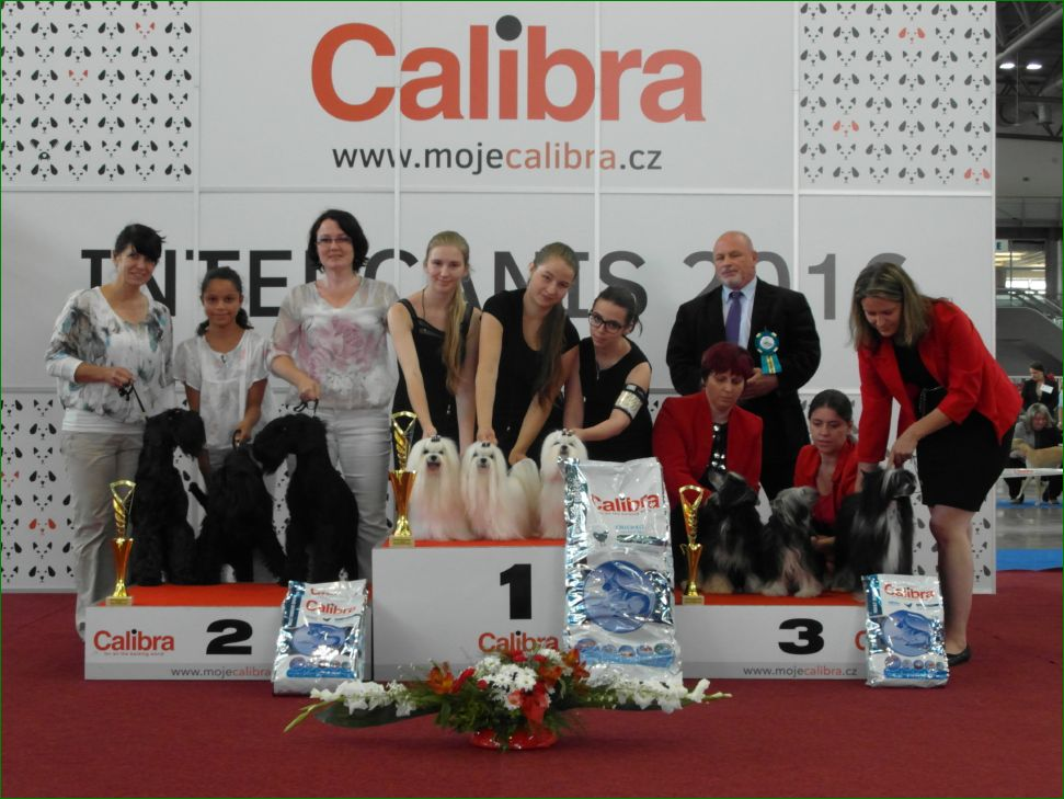 Best Breeders' Group (Sunday, 19 June 2016) - BIS CACIB Intercanis Brno 2016 (Czech Republic), 18-19 June 2016