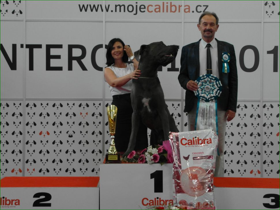 Best Junior of FCI group II  - BIS CACIB Intercanis Brno 2016 (Czech Republic), 18-19 June 2016