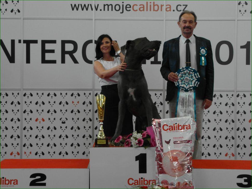 Лучший юниор группы FCI II - BIS CACIB «Intercanis» Брно (Чехия), 18-19 июня 2016 года