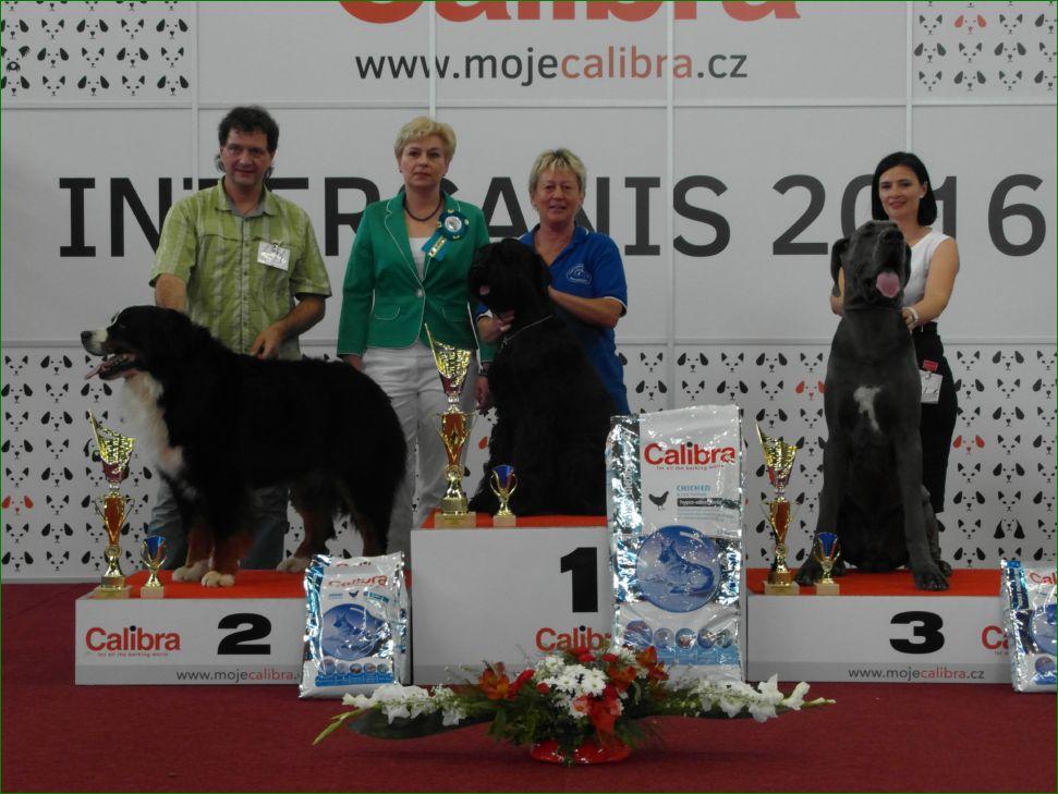 Группа FCI II - BIS CACIB «Intercanis» Брно (Чехия), 18-19 июня 2016 года