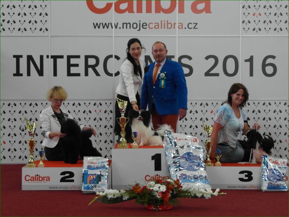 Группа FCI IX - BIS CACIB «Intercanis» Брно (Чехия), 18-19 июня 2016 года