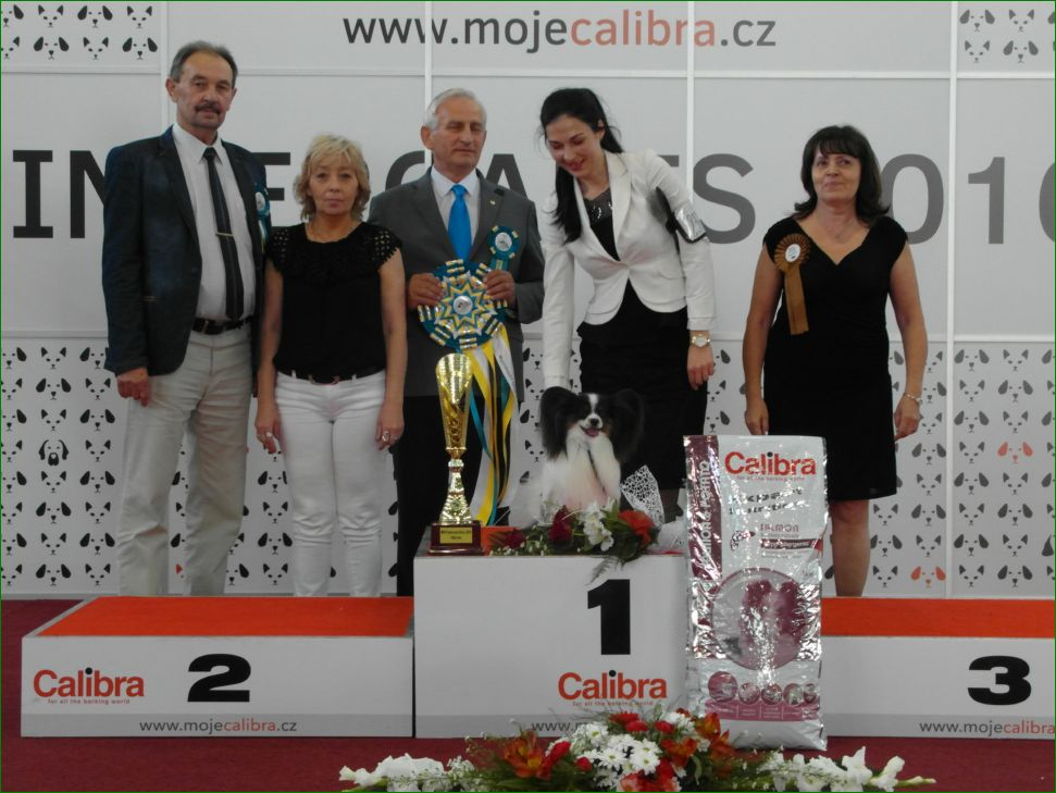 Best Dog of the Day (Sunday, 19 June, 2016) - BIS CACIB Intercanis Brno 2016 (Czech Republic), 18-19 June 2016