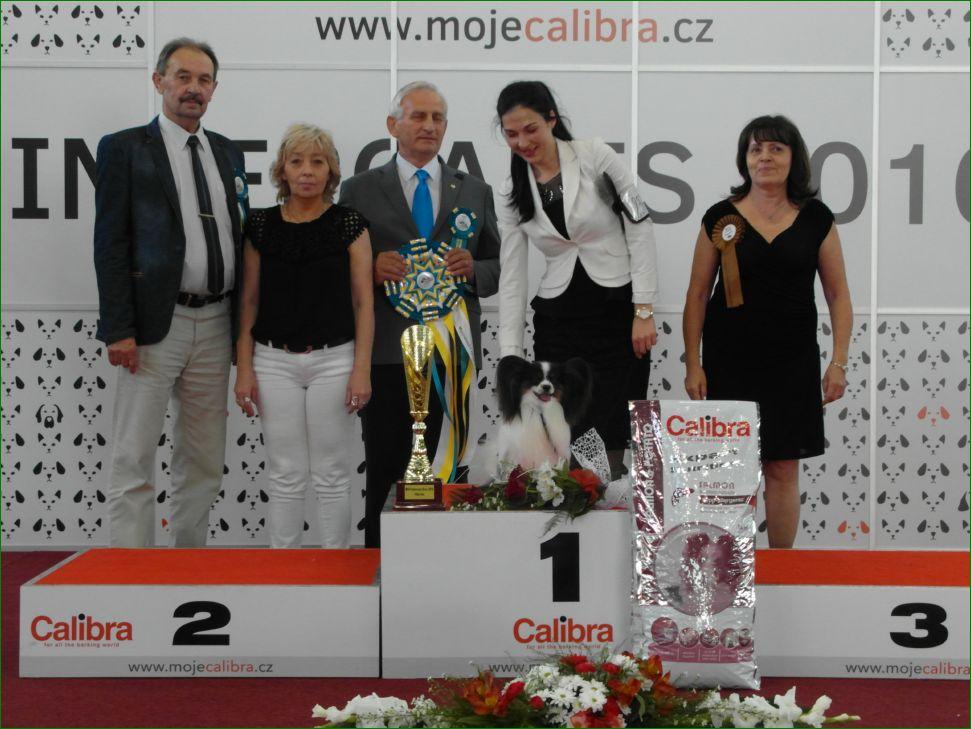 Лучшая собака дня (воскресенье, 19 июня 2016) - BIS CACIB «Intercanis» Брно (Чехия), 18-19 июня 2016 года