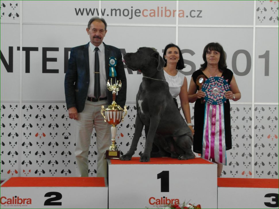Best Junior (JBIS) - BIS CACIB Intercanis Brno 2016 (Czech Republic), 18-19 June 2016