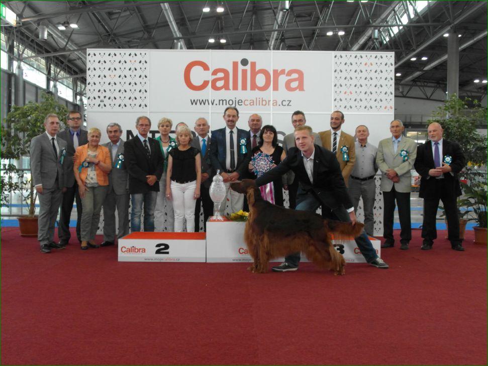 Лучшая собака выставки (BIS) - BIS CACIB «Intercanis» Брно (Чехия), 18-19 июня 2016 года